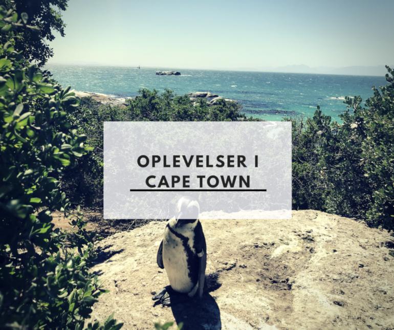 Oplevelser i Cape Town