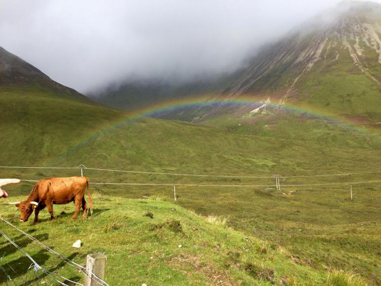 Skotske dyr