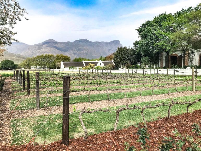 Vingård i Sydafrika