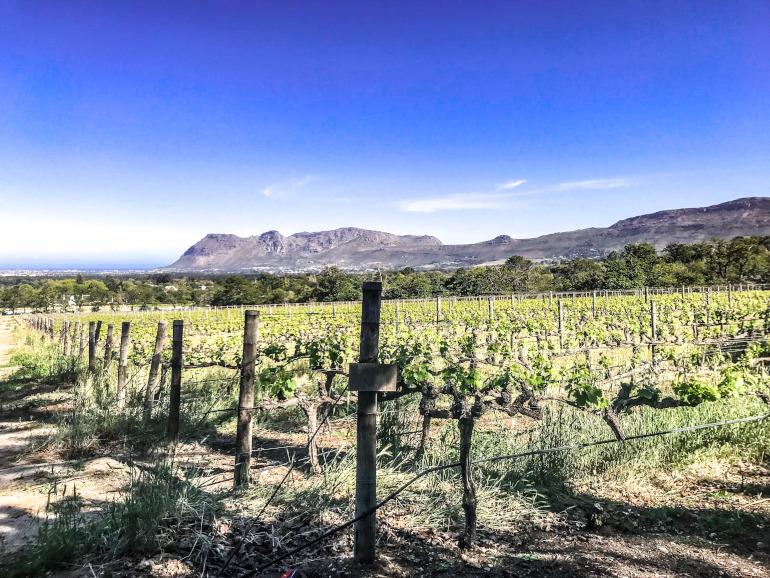 Vinland nær Cape Town