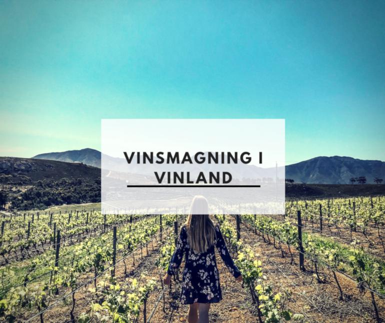 Vinsmagning i vinland
